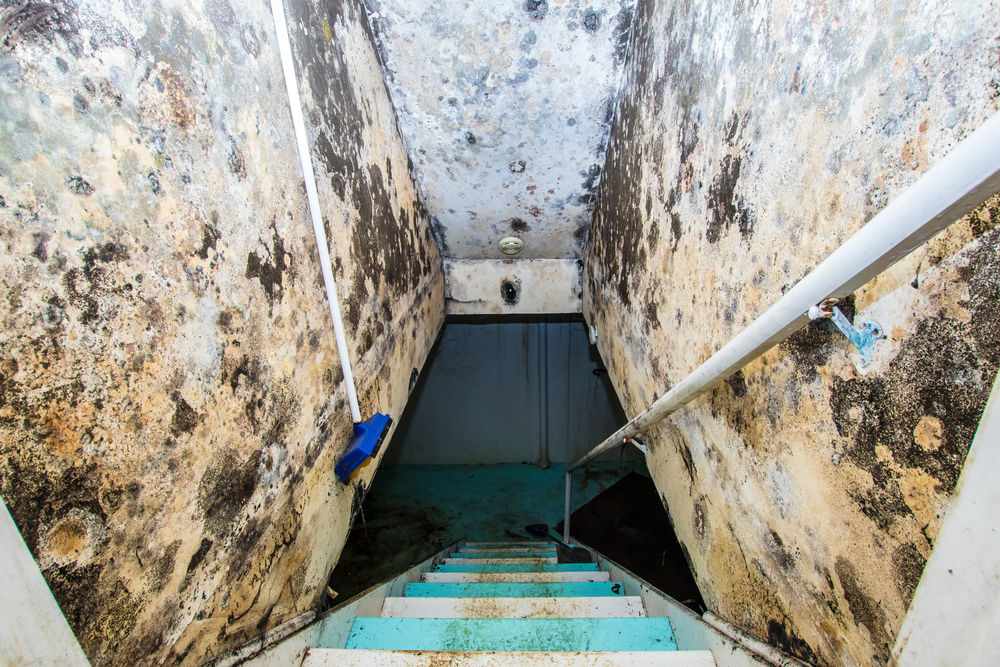 Mold in your Basement
