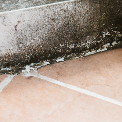 Do You Have Mold In Your Basement?