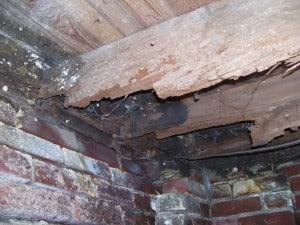 Toledo Bat Repair