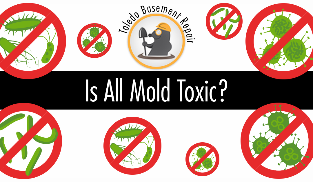 is all mold toxic