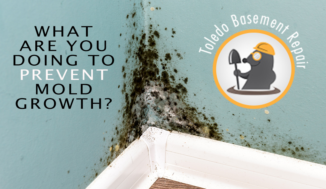How To Prevent Mold Growth In Your Basement