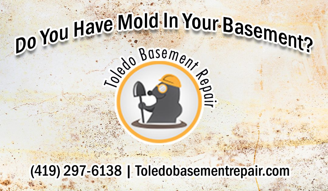 Do You Have Mold Growth In Your Home?