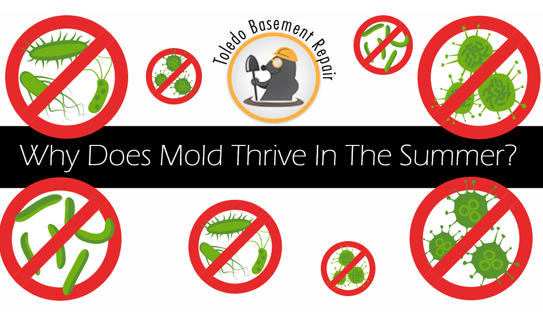 Why You Find Mold More Often In The Summer
