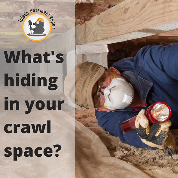 What's hiding in your crawl space?